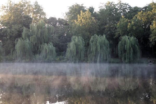 Misty Morn at Nathanael Greene Park