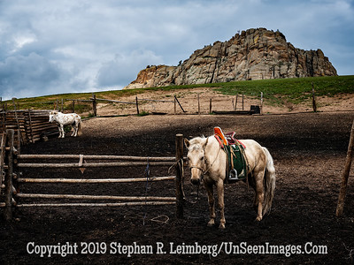 Horses at HorseFarm Copyright 2019 Steve Leimberg UnSeenImages Com _DSF0957
