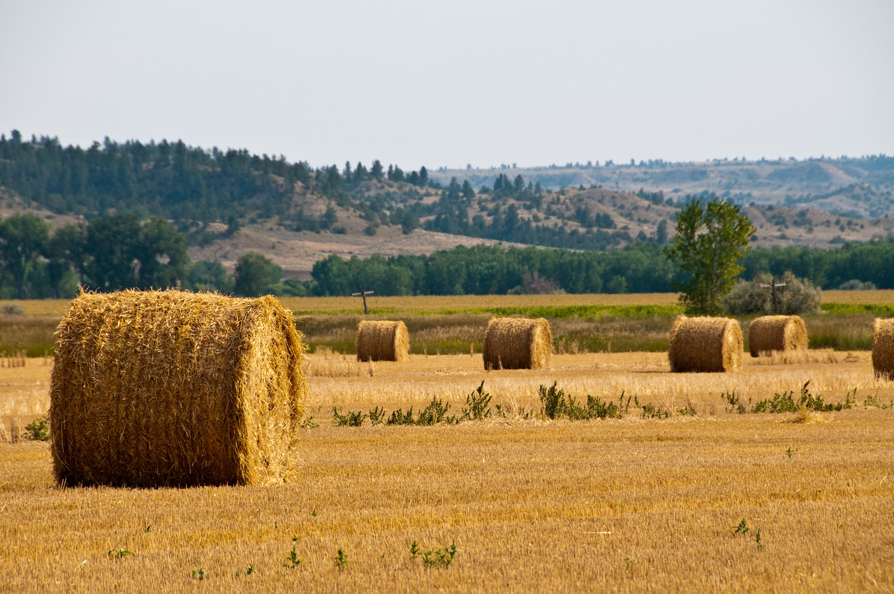 Another view of those round hay bails.
