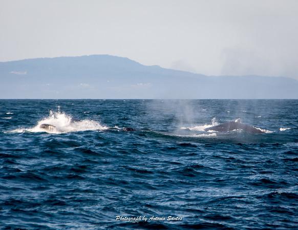 2018-10-27 Monterey Santa Cruz-135-47