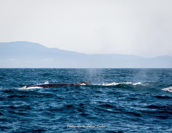 2018-10-27 Monterey Santa Cruz-137-49