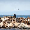 2018-10-27 Monterey Santa Cruz-73-21