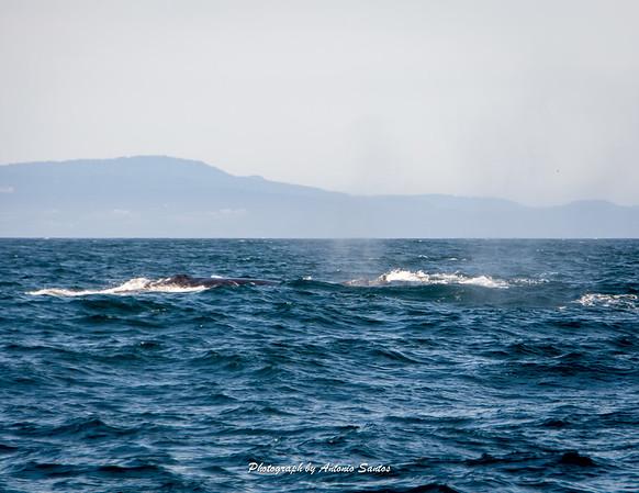 2018-10-27 Monterey Santa Cruz-136-48