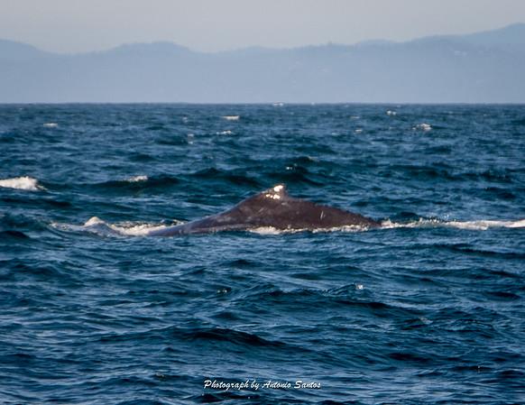 2018-10-27 Monterey Santa Cruz-129-42