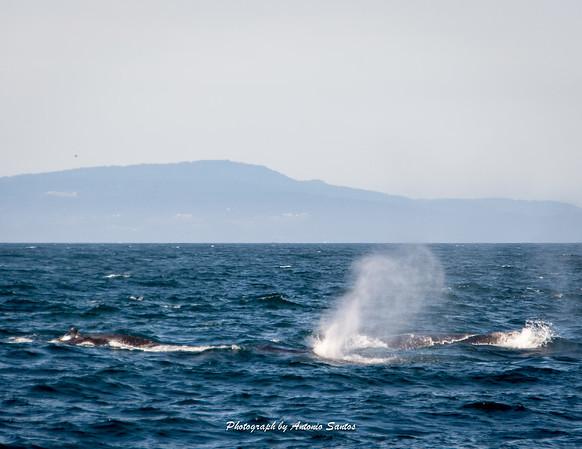 2018-10-27 Monterey Santa Cruz-133-45