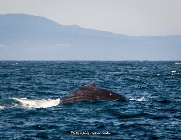 2018-10-27 Monterey Santa Cruz-140-52