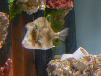 Mote Marine Labs - 12/30/2007