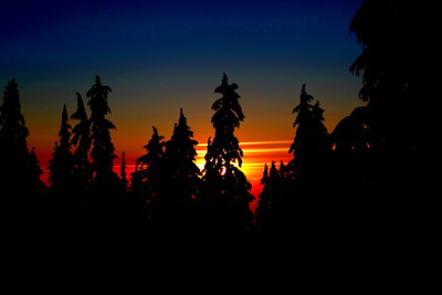 Sunset Silhouette #2  Another interpretation of this winter sunset scene. In this one I boosted the saturation and contrast to make the foreground trees into silhouettes and the sunset colors into primaries.