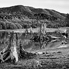 Tree Stumps at Alder Lake