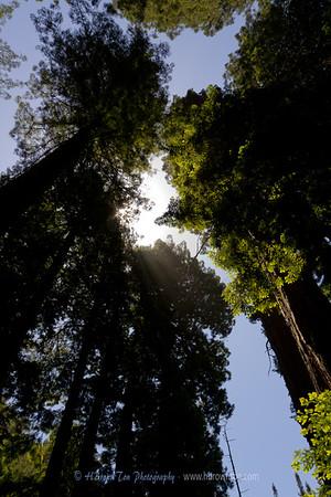 Muir Woods, California