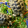 Little Tortoises