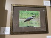 "augh!  Drives me nuts!  Trinity River Photo Contest... and this picture was labled ""Blue Heron""  No, try Yellow Crowned Night Heron.  {sigh}"