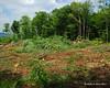 Brush piles getting bigger and bigger