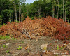 One of the previous brush piles