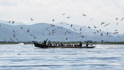 Inle-655