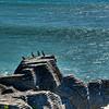 Pancake Rocks, west coast of South Island
