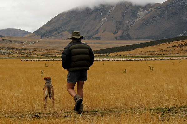 Richard and his sheep dog, Flock Hill Sheep Station, near Arthur's Pass
