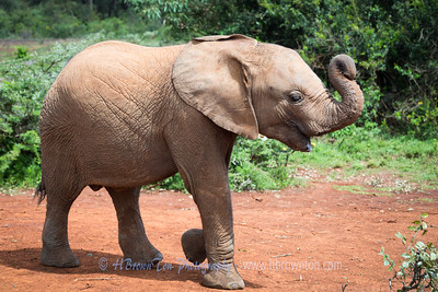 David Sheldrick Wildlife Trusts' Orphans' Project