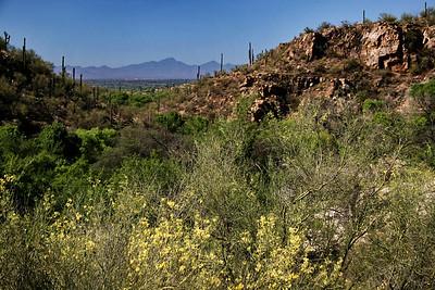Sabino Canyon; Tucson, Arizona