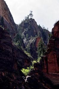 Zion National Park; Springdale, Utah