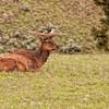 Elk resting near Tower