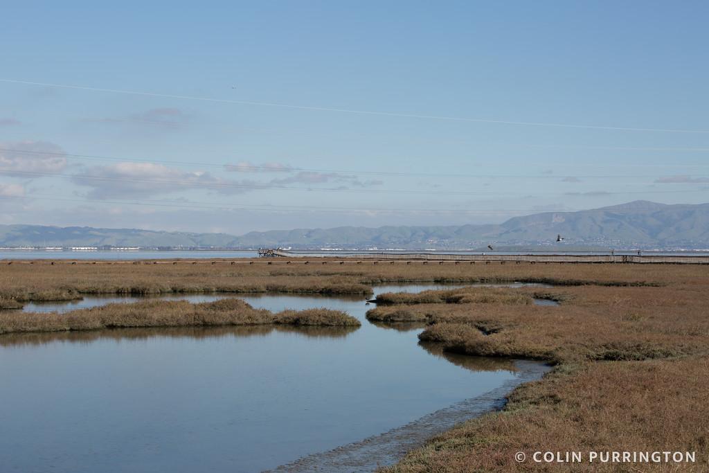 Marsh pools