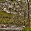 Ohiopyle Falls 2