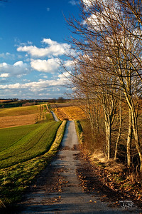 Autumn Path in Germany