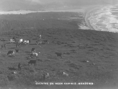 From about 1860 until 1905, cattle grazed on Neahkahnie Meadows.