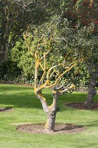 Dryadic tree