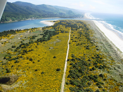 Consultants in the 1950s assured park staff the Scotch broom would help stabilize the dunes, then would die out under the shade of mature pine trees. By the 21st century, Scotch broom had overwhelmed the park.
