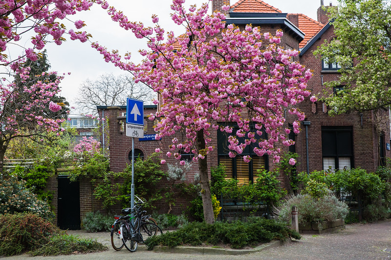 2019_April Netherlands -Kekuenhof & Eidenhoven-4516