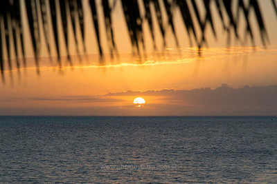 Sunset under a palm at plage La Poe, New Caledonia.