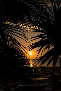 Sunset through the palms. Ouano, New Caledonia.