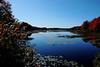 North end of pond at Sebasco