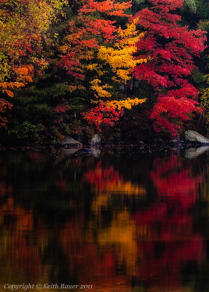 Reflections of Fall #3