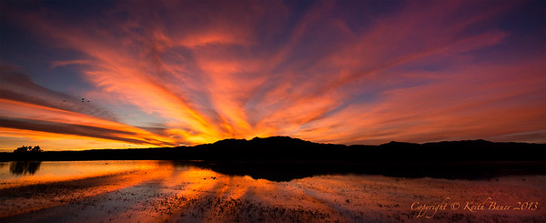 Bosque Del Apache Sunset