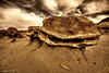 Bisti Wilderness at the Egg Factory