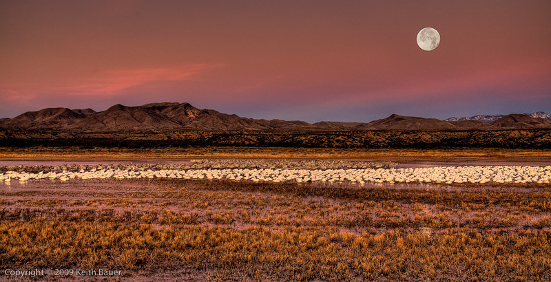 Bosque Del Apache Moon Set