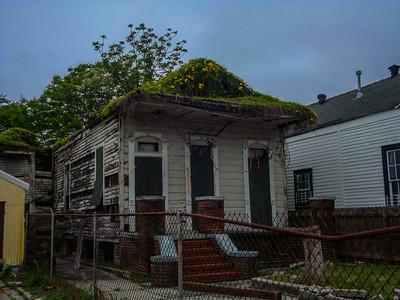 Treme overgrown house