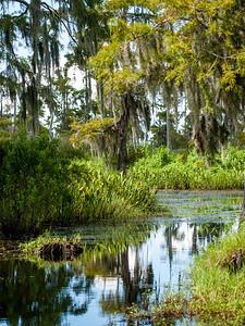Marsh country