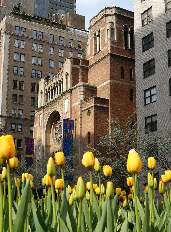 April Tulips on Park Avenue at Christ Church