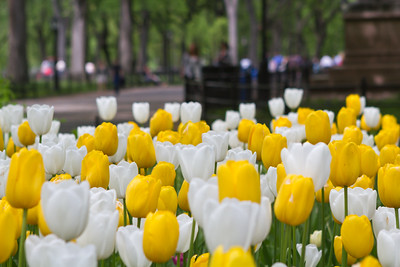Spring in New York City New York