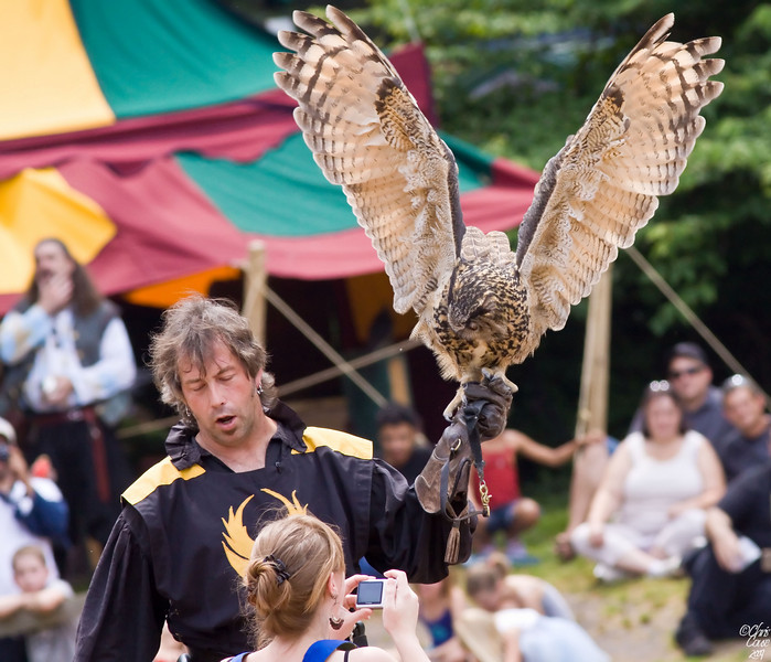 Sir Robert Cary Falconry - Eagle Owl