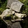 Rock Sculpture, Oparara Basin.