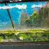 Underwater viewing chamber