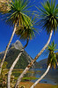 Mitre Peak beyond the Palms - Milford Sound, New Zealand