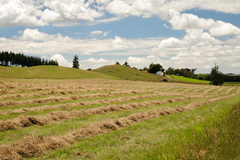 Freshly mown hay on small New Zealand farm