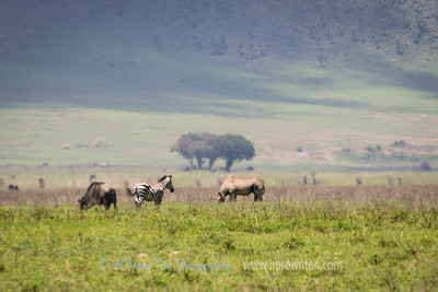 The allusive Rhino spotted far in the distance