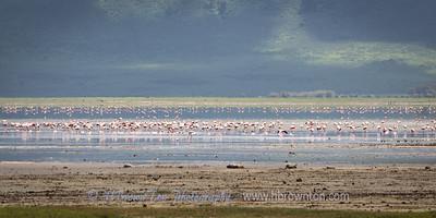 Thousands of Flamingos at Lake Magadi in Ngorongoro Crater